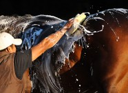 bath_backstretch_worker_scenic_groom_suds_sponge_web_sarah_andrew