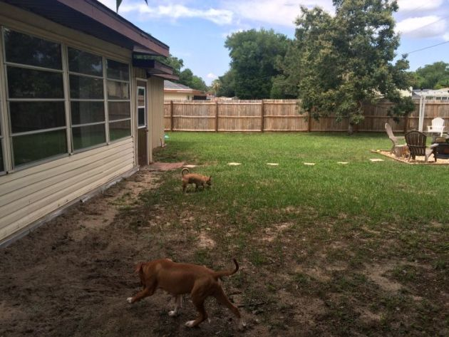 Backyard - Hole