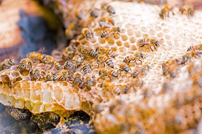 Resultado de imagen para aztec honey