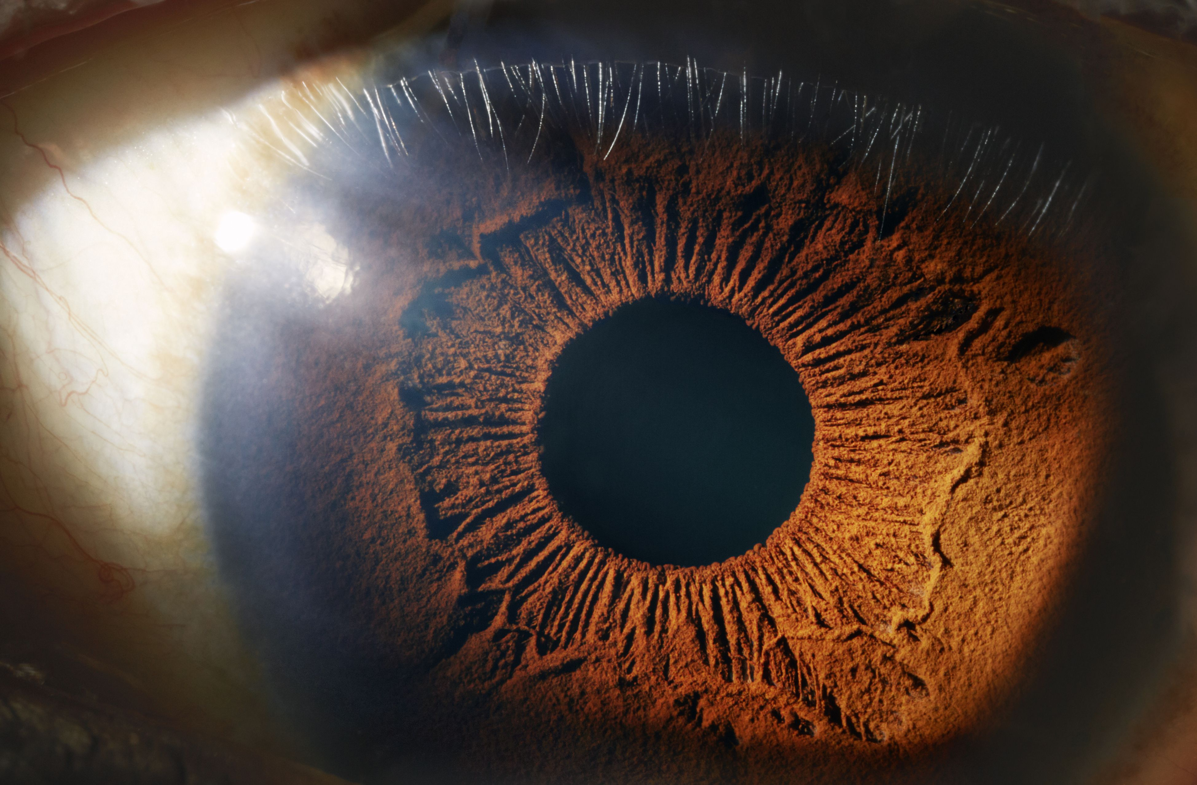 How The Human Eye Works Structure And Function