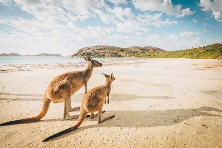 Esperance Beach Kangaroos