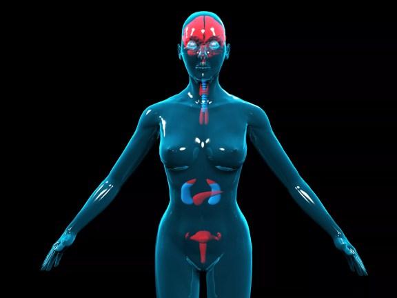 Ilustração 3D do hormônio feminino / sistema endócrino