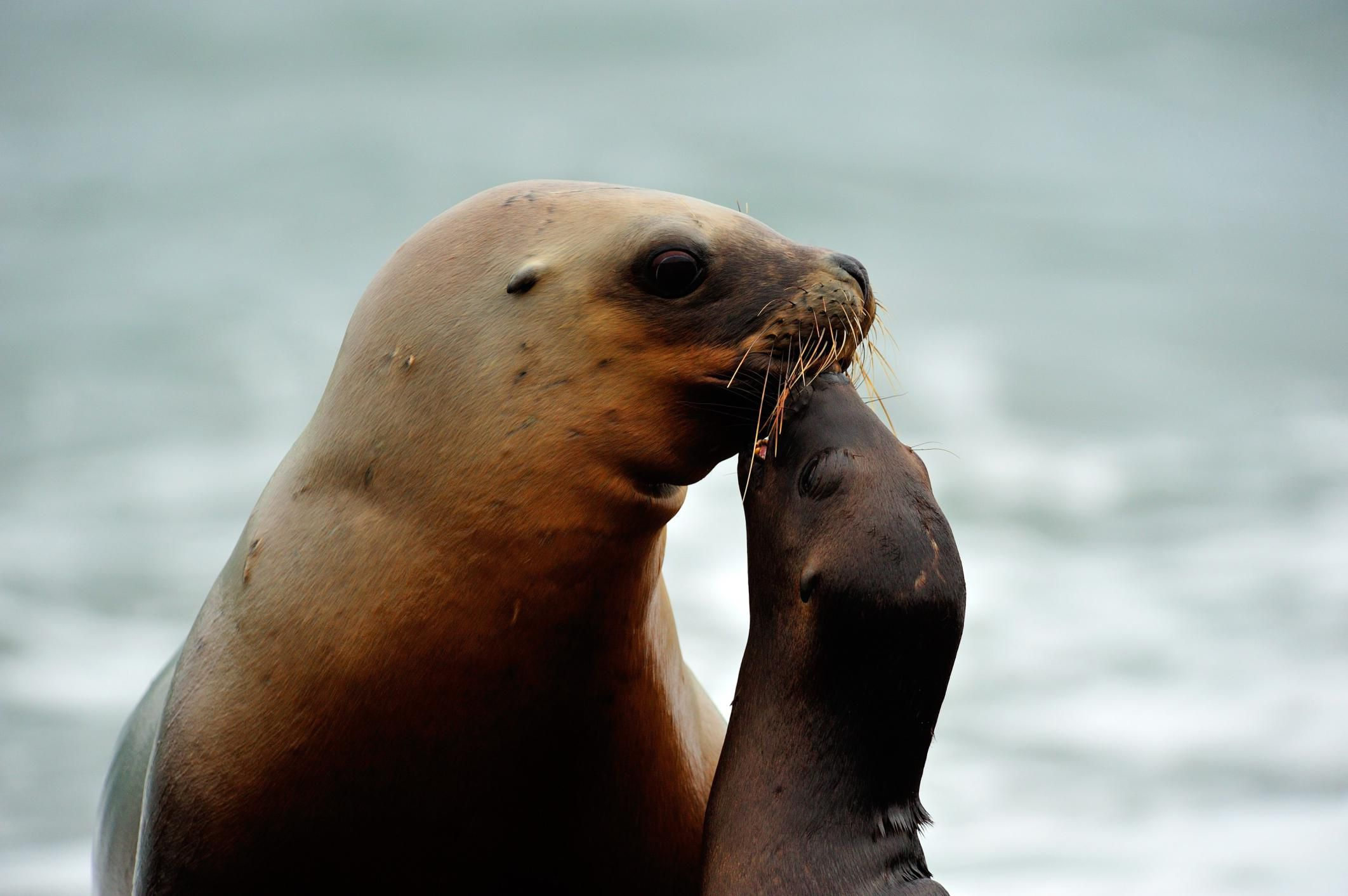 Top 10 Facts About Walruses