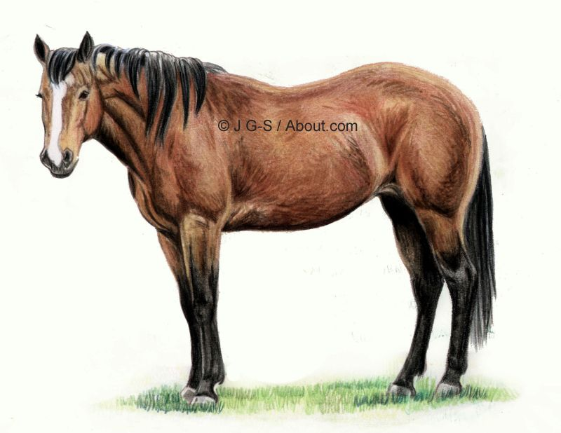 Drawing Lesson A Realistic Horse In Colored Pencil