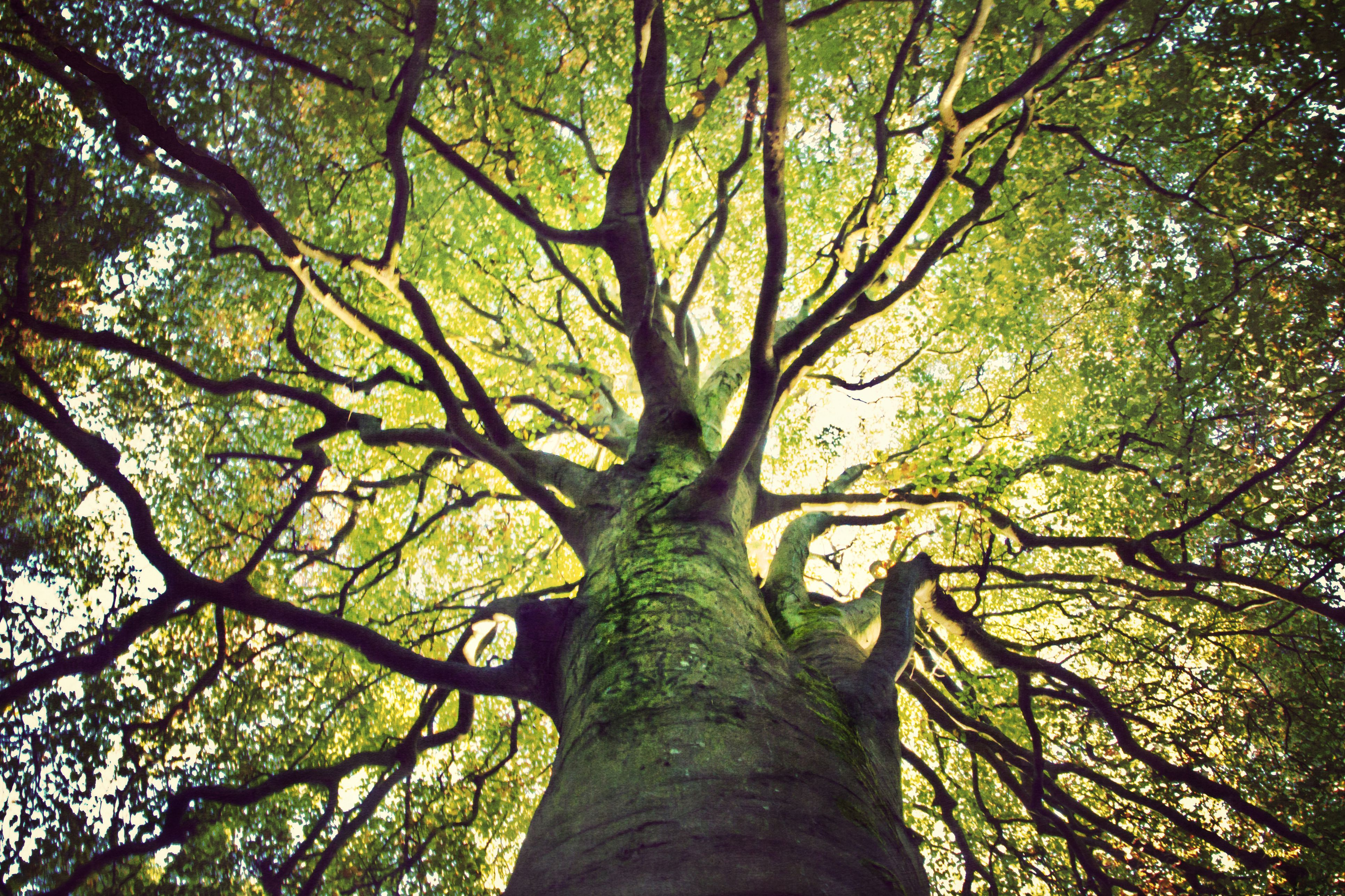 Living And Non Living Cells And Tissues In Trees