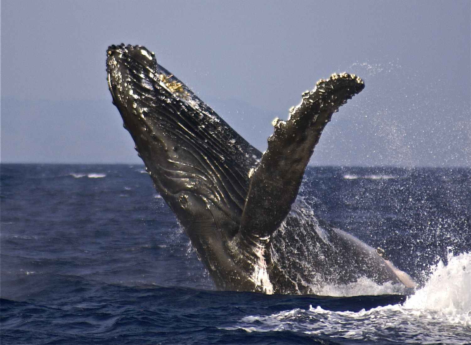 Whales Word Search Vocabulary Crossword And More