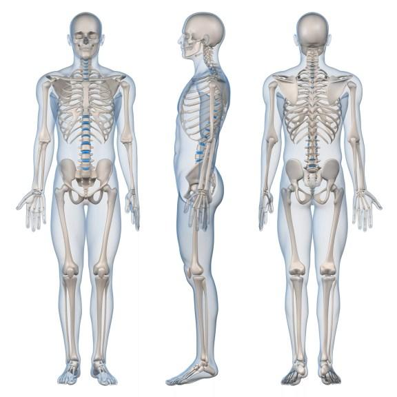 Ilustração 3D do esqueleto masculino humano.