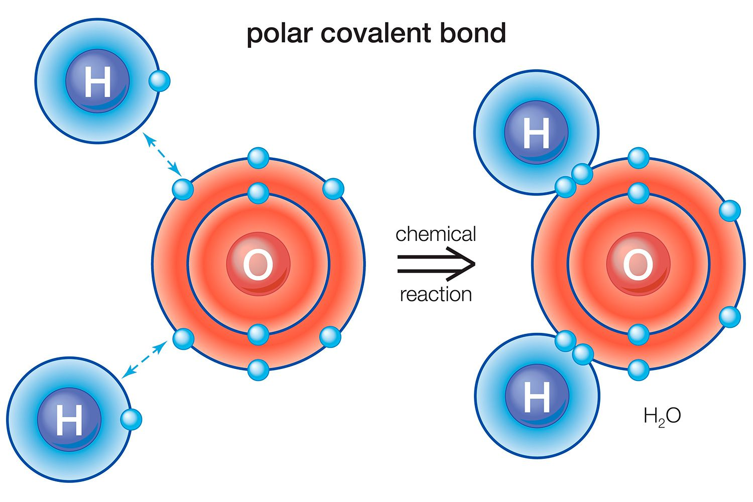 Definition And Examples Of A Polar Bond In Chemistry