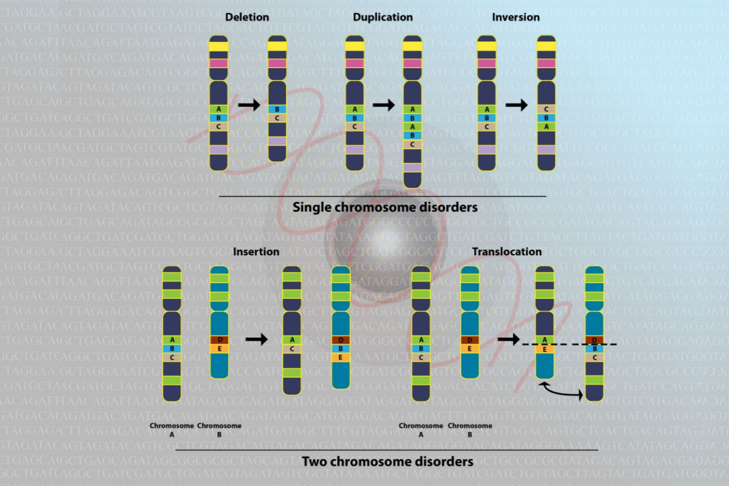 How Chromosome Mutations Occur