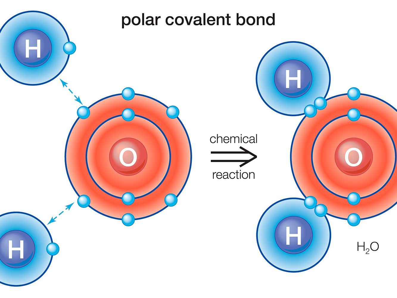 Label The Following Diagram Of Water Molecules