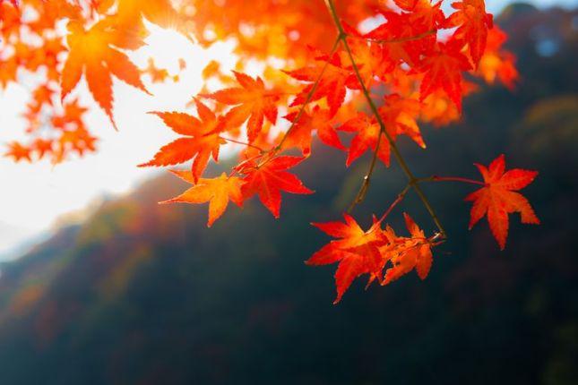 Резултат с изображение за fall pictures