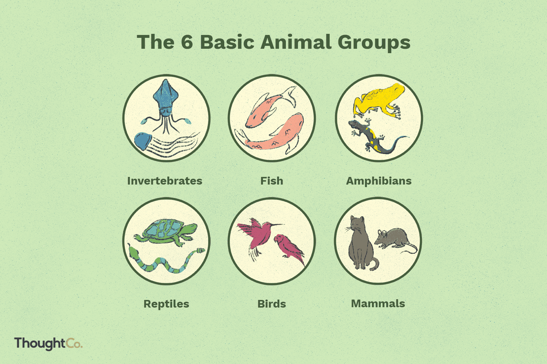 6 Basic Animal Groups