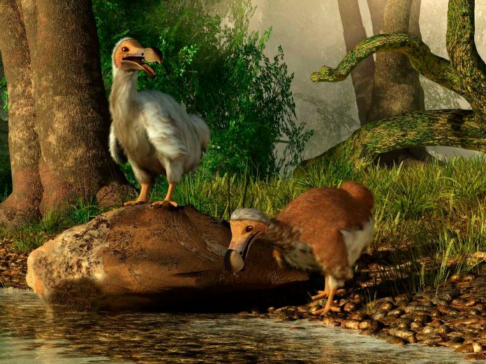 10 Birds That Humans and Cats Hunted to Extinction