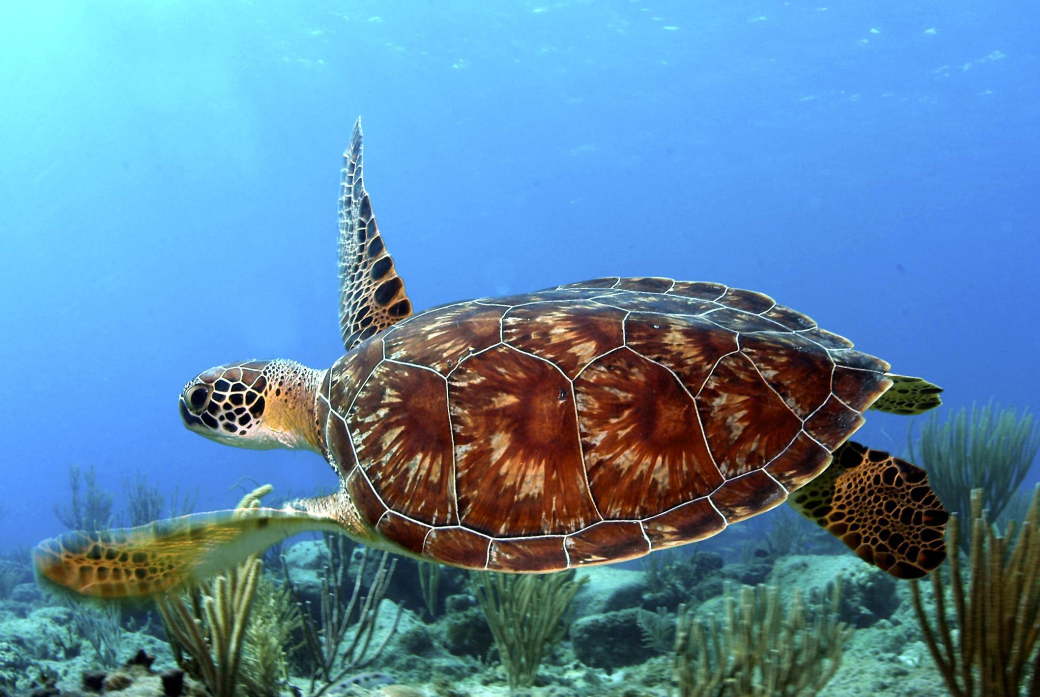 Interesting Green Sea Turtle Facts