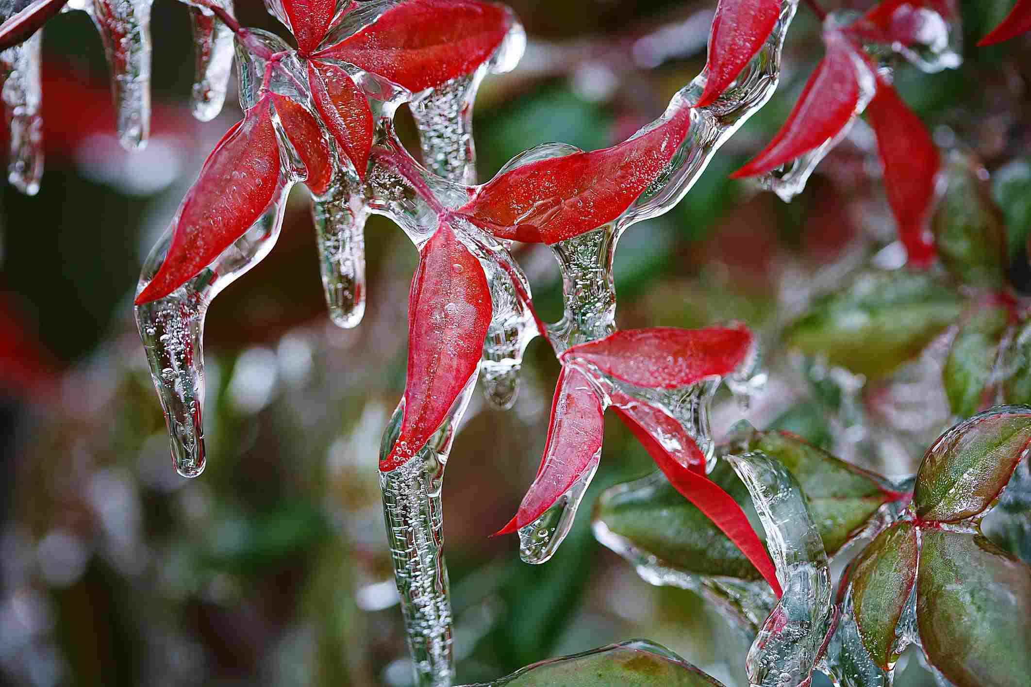 Rain Snow Sleet And Other Types Of Precipitation