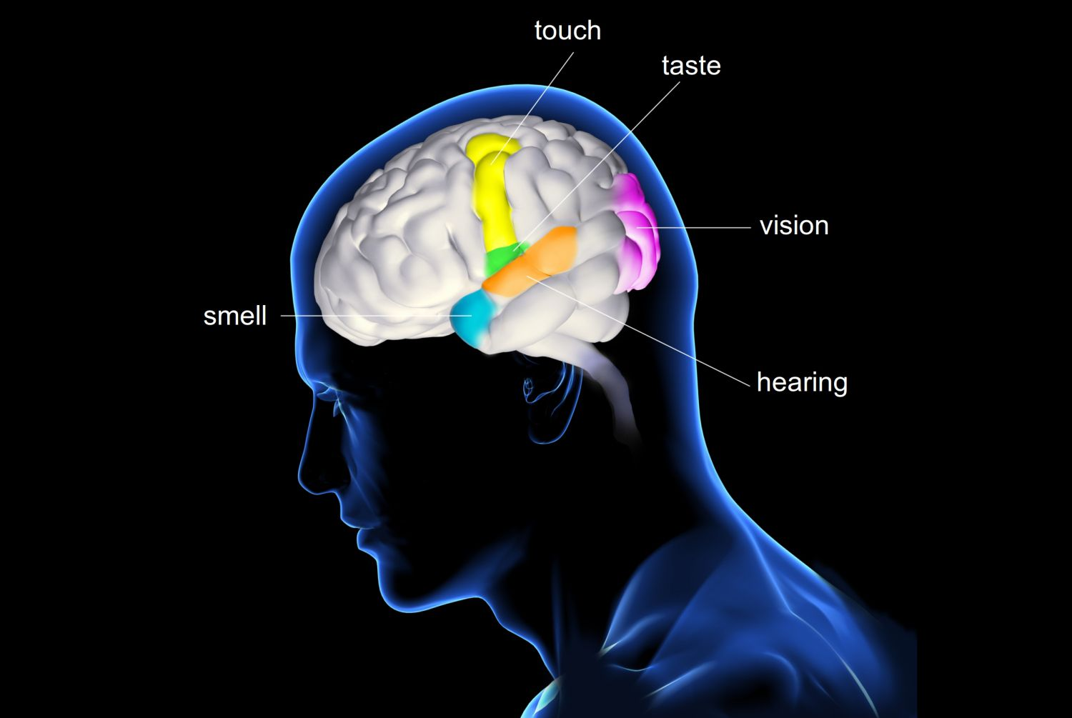 Overview Of The Five Senses