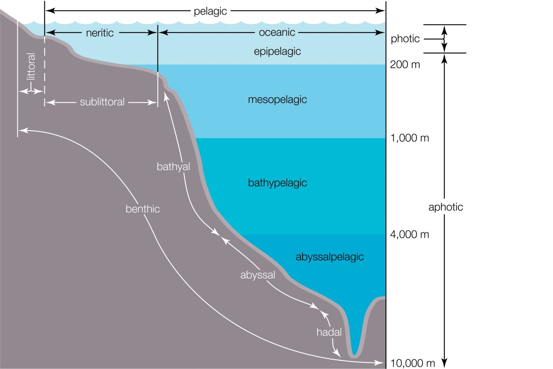 Life In The Mesopelagic Zone Of The Ocean