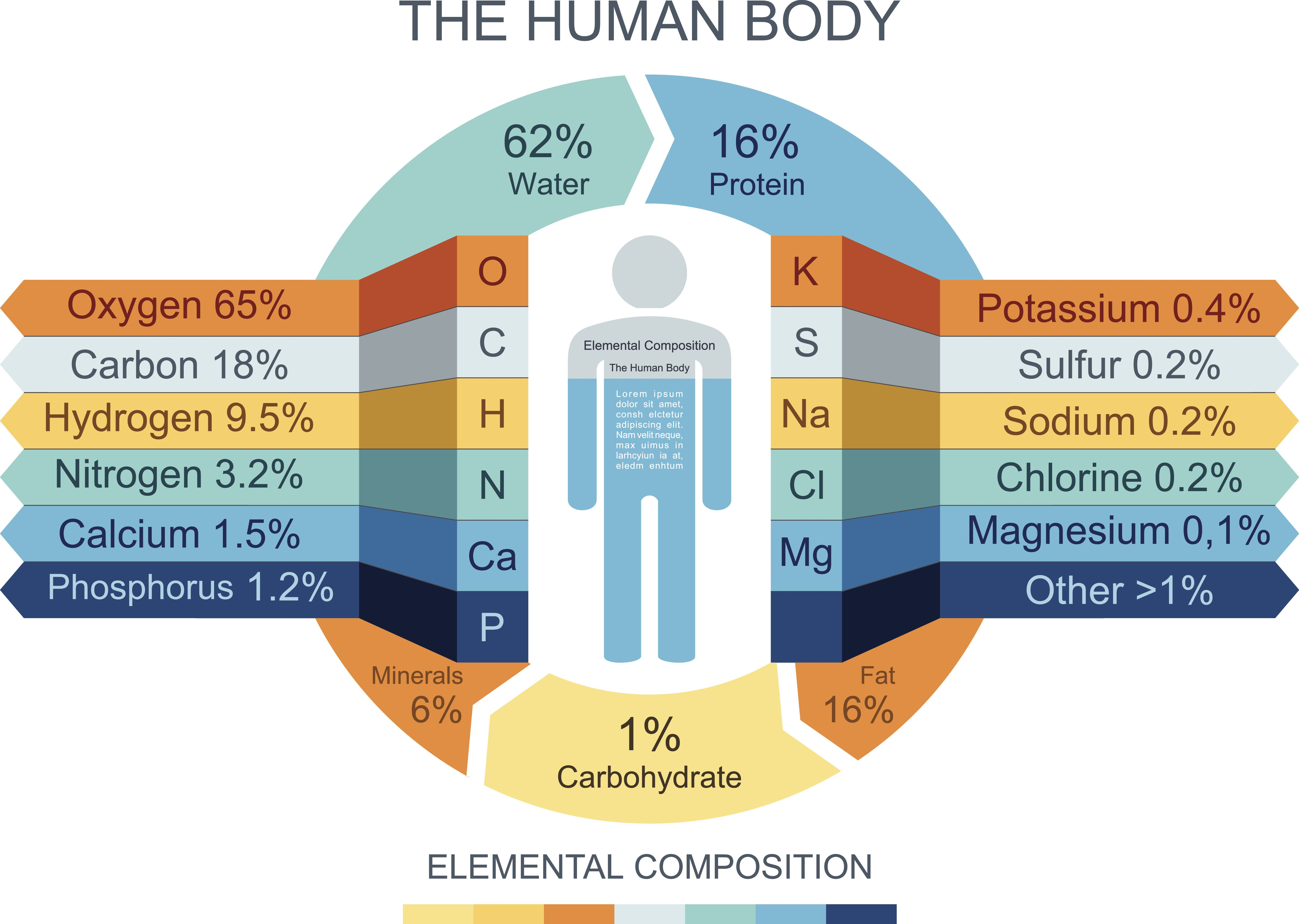 Chemical Composition Of The Human Body