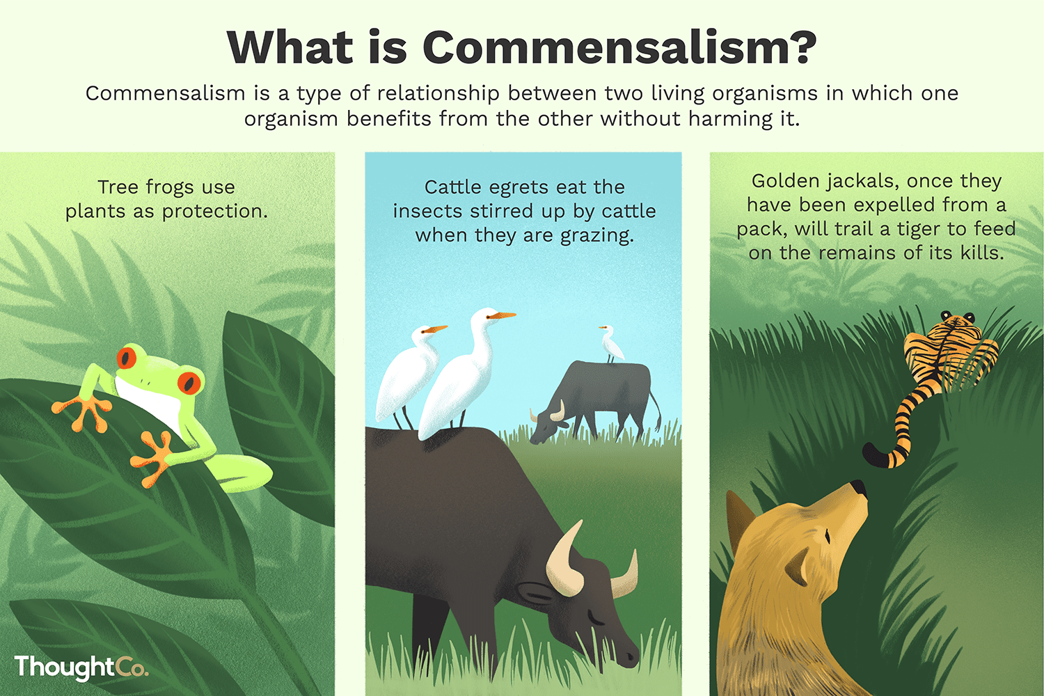 The Gallery For Gt Symbiosis Examples Commensalism