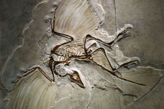 10 Facts About Archaeopteryx, the Famous 'Dino-Bird'