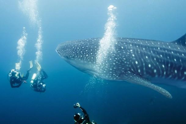 10 Fatos Fascinantes Sobre Tubarões Dicas Curiosidades