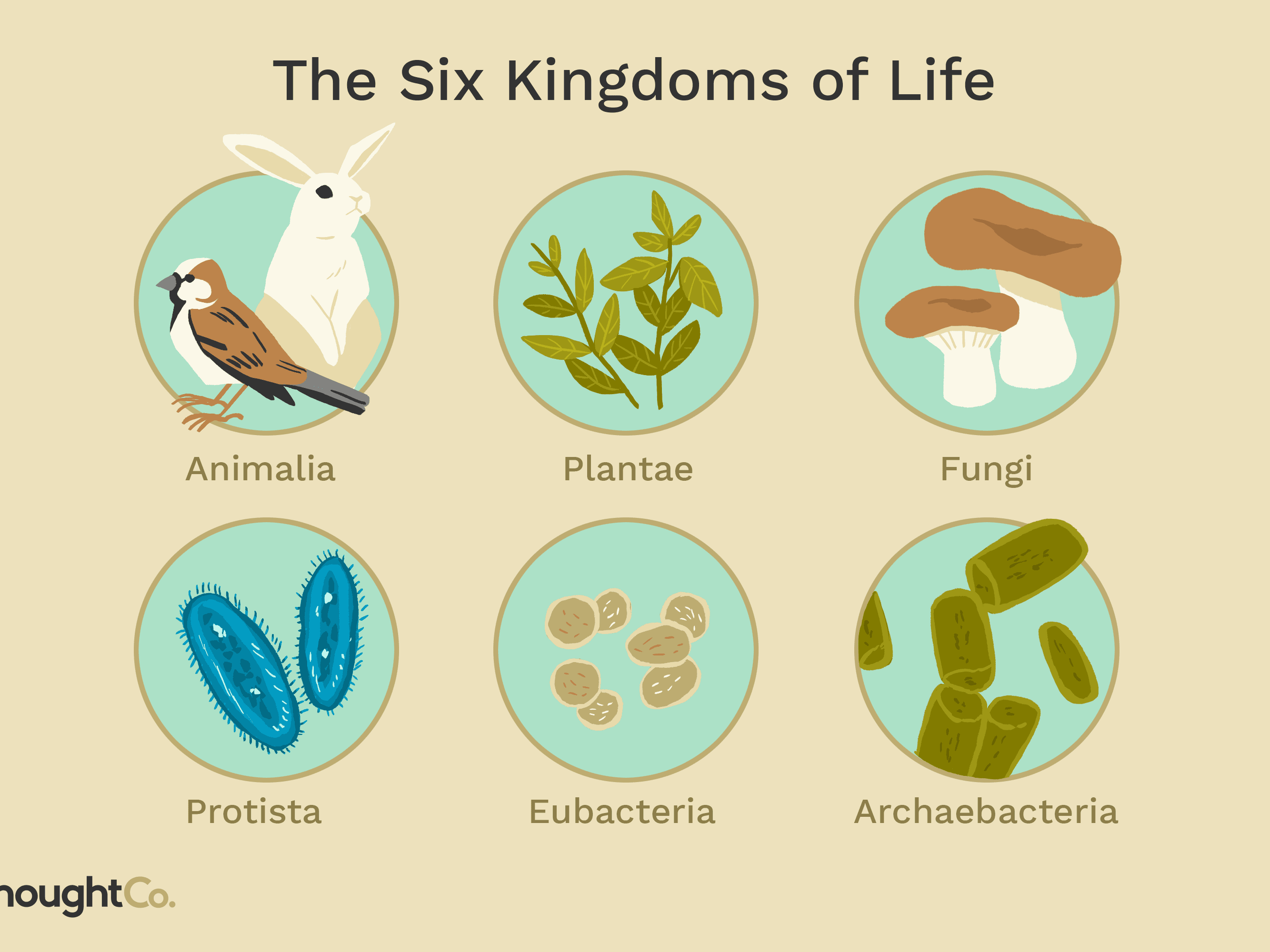 How Many Living Things Are On Earth Right Now