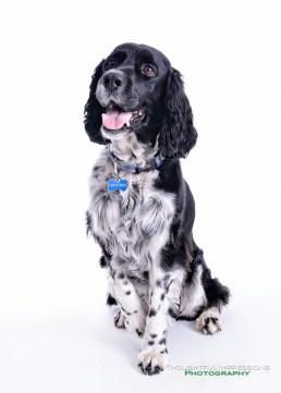 Pet Portrait Day 2014 – helping the Kawartha Lakes Humane Society   Peterborough, Kawartha Lakes, Durham Photographer