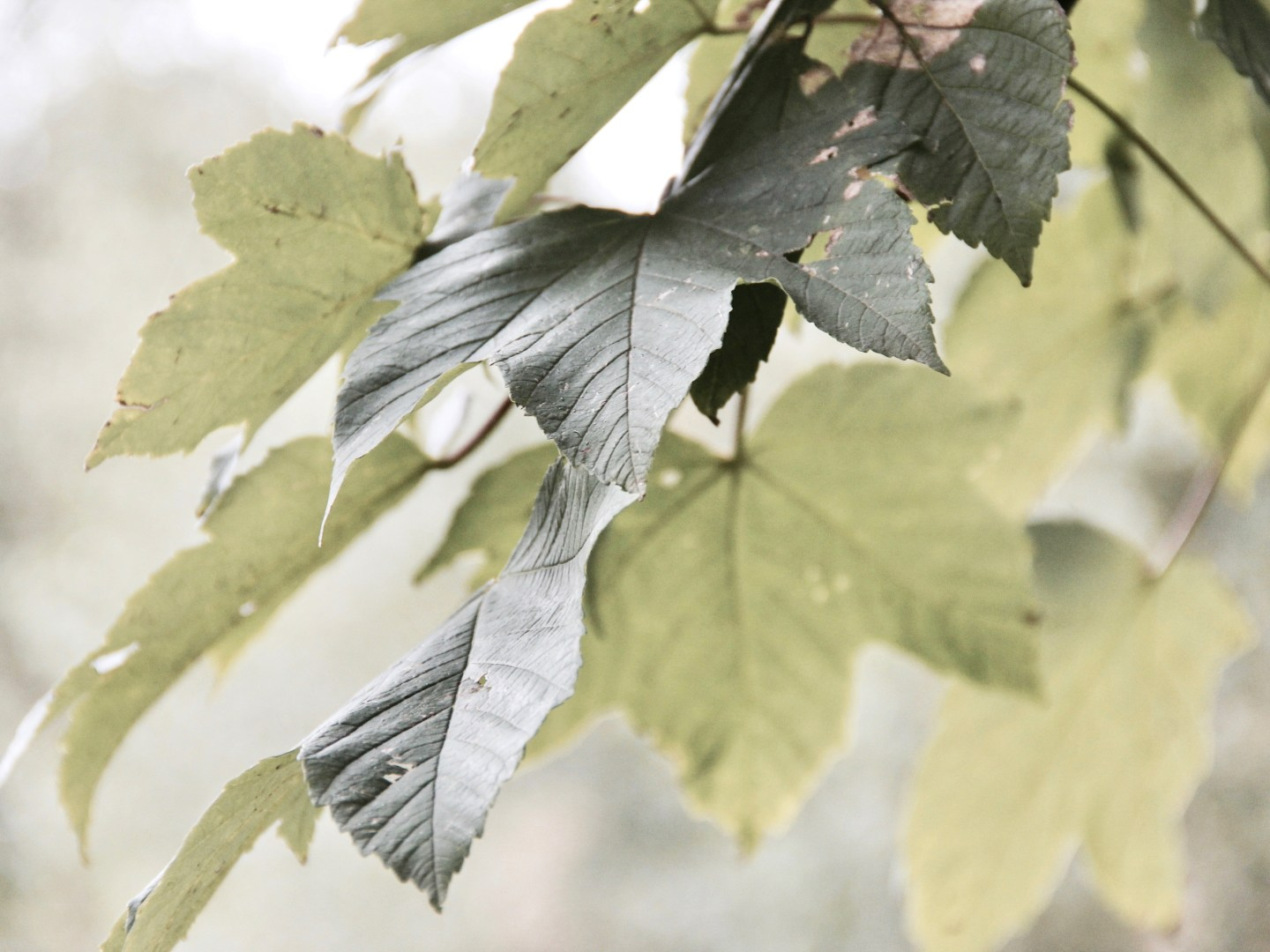 Neeltje's Thoughts: Fall - Photography