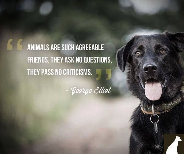 Animals and mental health
