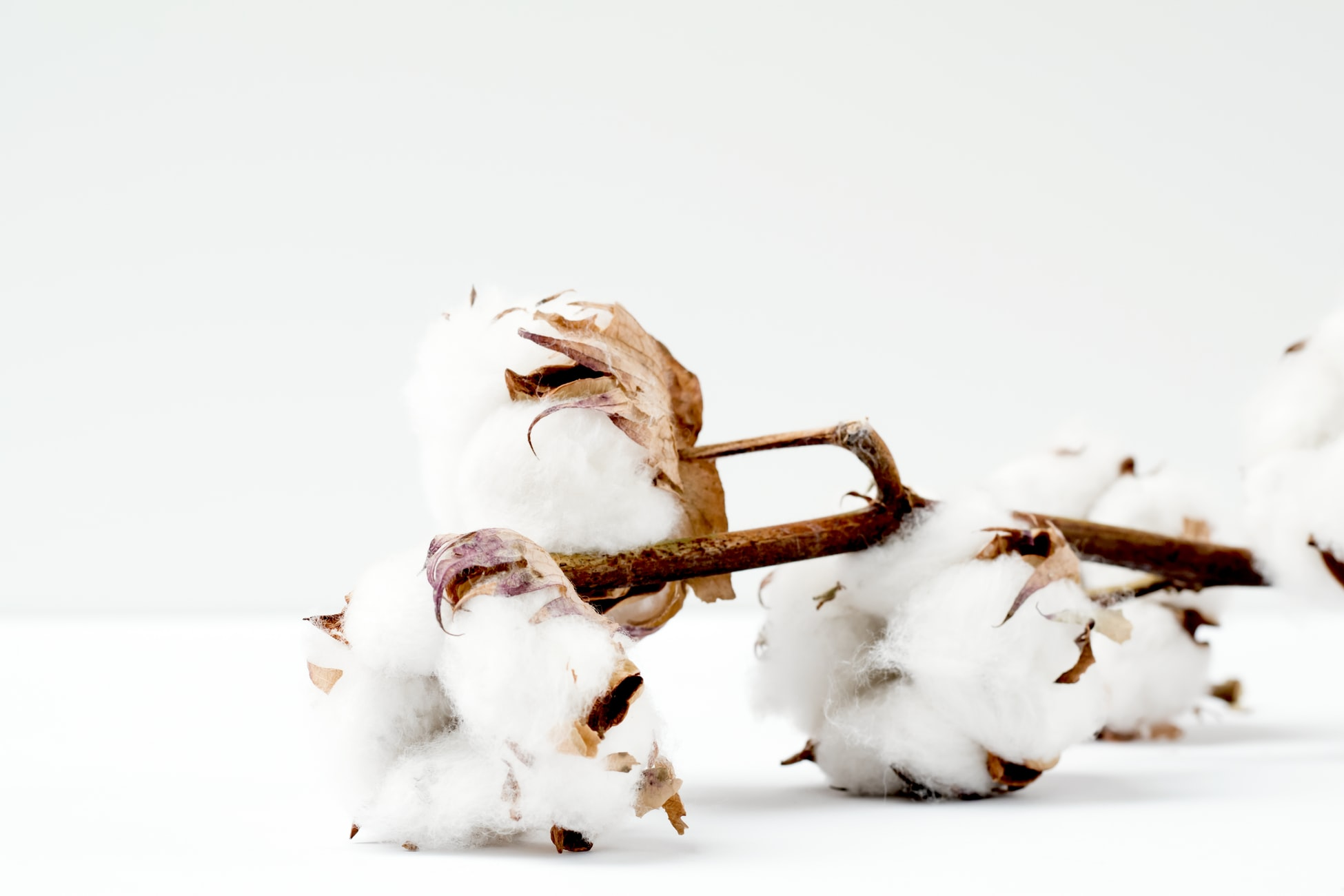 """What is """"Greenwashing"""" and How Can You Spot It in the Fashion Industry?"""