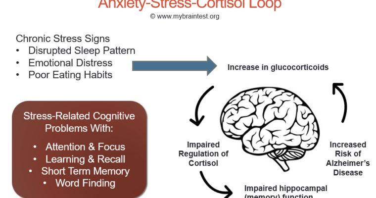 The connection between anxiety and memory loss