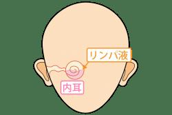 内耳とリンパ液の