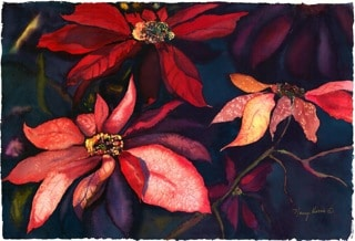 nancy-bryant-Poinsettias-in-the-Wild