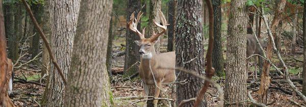 branson-deer-hunting