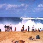 North Shore Oahu Hawaii Best Surf
