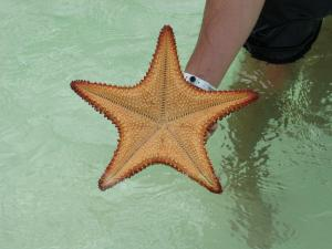 Starfish at Playa Sirena, Cayo Largo, Cuba