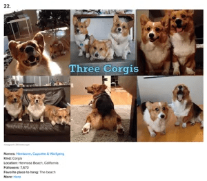 Buzzfeed cutest Corgis on Instagram