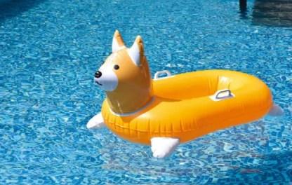 Corgi Float