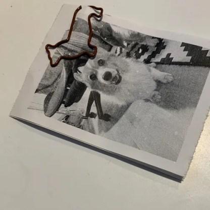 Corgi Paper Clips