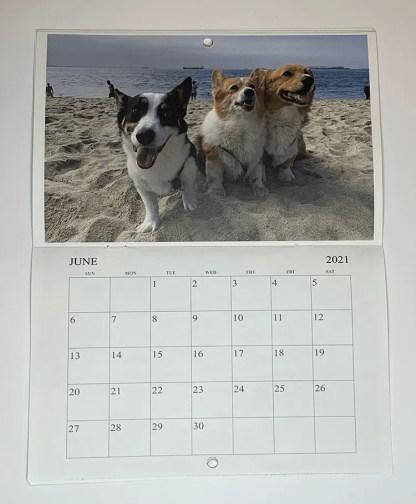 ROSIE'S DOG BEACH LONG BEACH