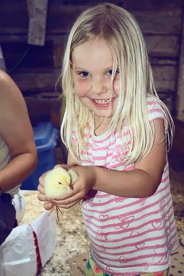 CSA Farm Bobcaygeon Kawartha Lakes - Chicken