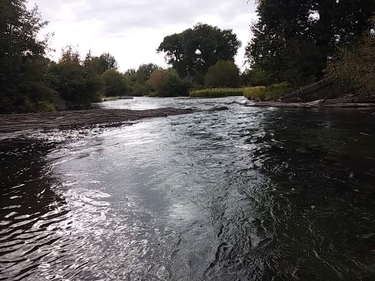 Photo of side channel on lower Henry's Fork.