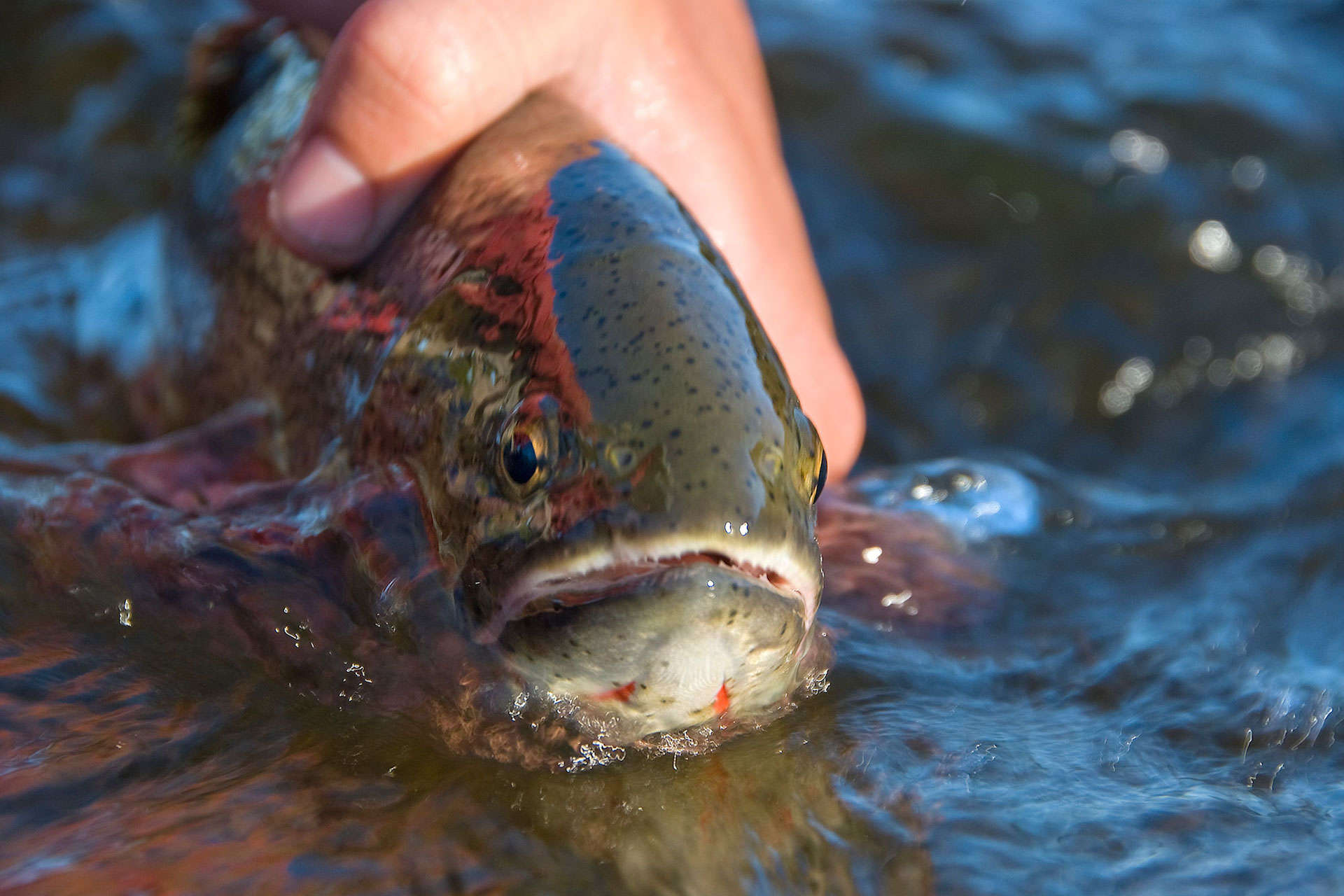 Fly Fishing Guide on the Snake River