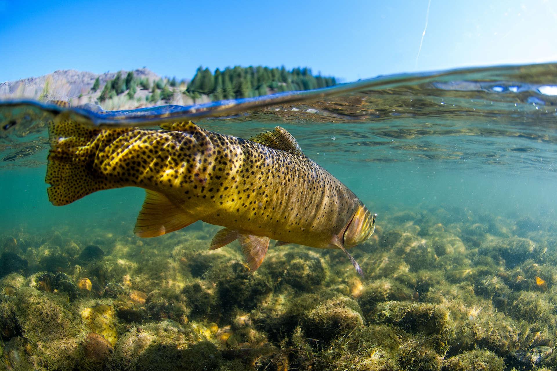 Three River Ranch Luxury Fishing Lodge