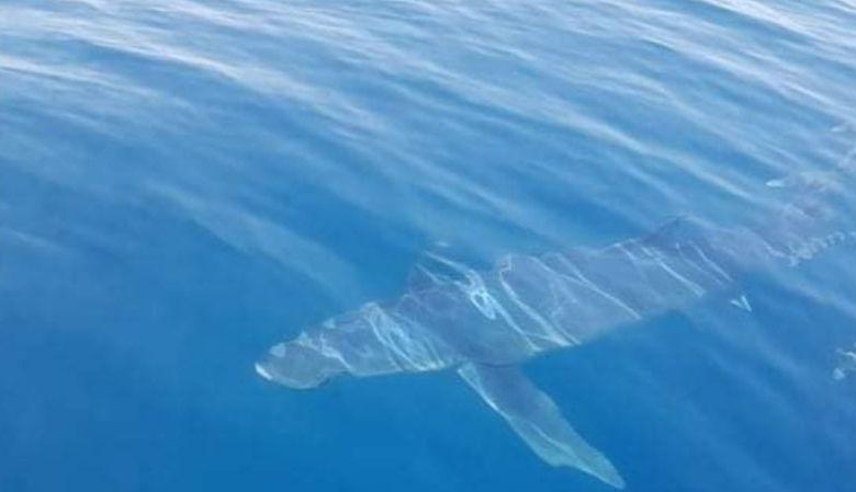 Καρχαρίας 5 μέτρων στην Κινέτα - Φωτό