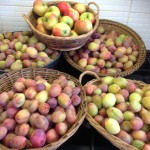 Even more plums, a few apples and yukky fingers