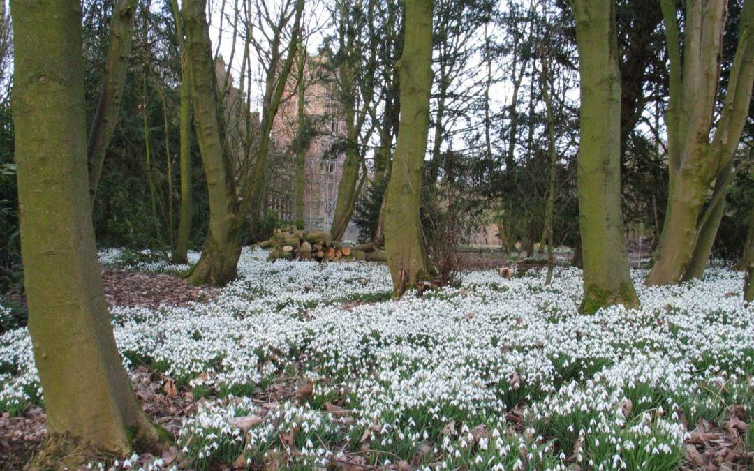 Snowdrops, friends and being perfect