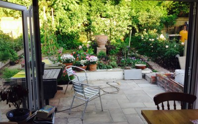 Now it's  merely very hot rather than scorching, here are some piccies of the garden
