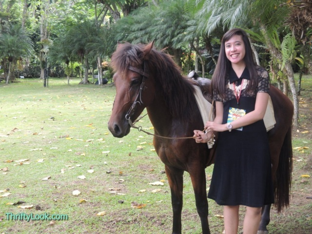 malagos garden resort, davao, park, horse, animal, outdoor