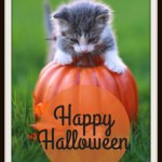 Happy Halloween #WordlessWednesday